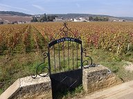 autumn 2007 burgundy report
