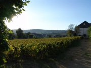 a day in meursault plus a two-faced volnay…