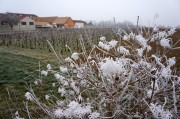 back from the frosty côtes