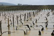 biblical rain & time to taste 40 vintages of montrachet?