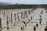 biblical rain & time to taste 40 vintages of montrachet?
