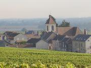 Morey in shimmering heat from roadside Bonnes-Mares