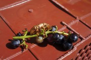 Ouf - long-since departed: A cicada lava(?)
