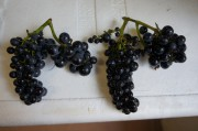 Charmes-Chambertin - but with fat-berried 'shoulders'