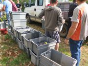 Final Day loading Hautes-Cotes fruit cases to Camion