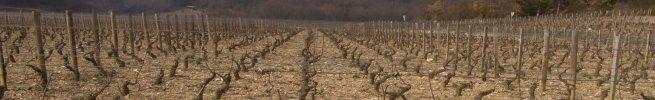 gevrey 1er les varoilles - march 2004