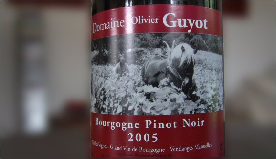 olivier guyon bourgogne pinot noir 2005