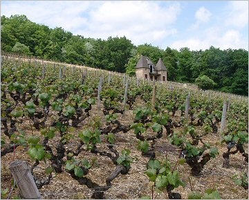 ponsot 1911 aligote in clos monts luisants
