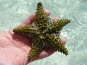 Caya Guillermo - beach fauna