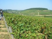 Superb view. Savigny Ile des Vergelesses vers Corton