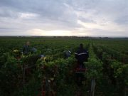 Picking in the Morey Clos Solon