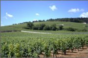 new vines for méo-camuzet and champy…