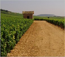 beaune - cent vignes looking north towards corton