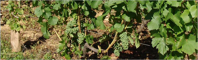 dublere - vines outside the front door