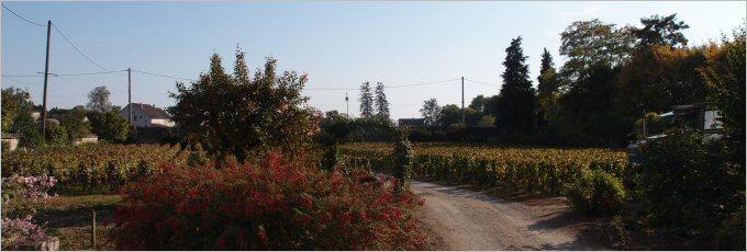 henri-germain-meursault-garden