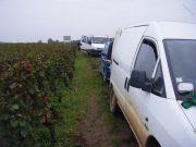 Day 6 - Vosne Village roadside RN74 along from Clos Vougeot