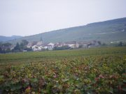 Day 6 - Vosne in the mist from roadside RN74 plot of Vosne Village