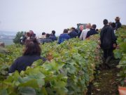 Day 6 - Arlaud team commencing exit from Vosne Petit Monts (vines horizontal to the hill)