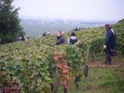 Day 6 - Arlaud vendangeurs exiting Petit Monts 2