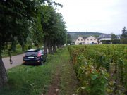 Vosne Village looking towards Vosne from RN74 verge side