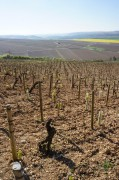 the chablis shuffle, part (day) 3