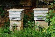 BM bees...