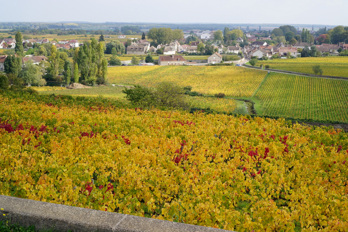 Amoureuses in the foreground, Vougeot in the background