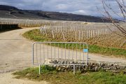 burgundian half-marathons…