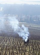 no smoke-trails in the vines!