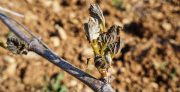 frost – a close call in the côtes