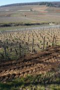 views of, and from, corton-charlemagne today…