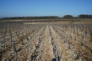 today's views of chablis…