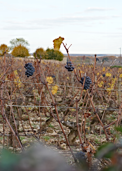 Volnay in November, 2019