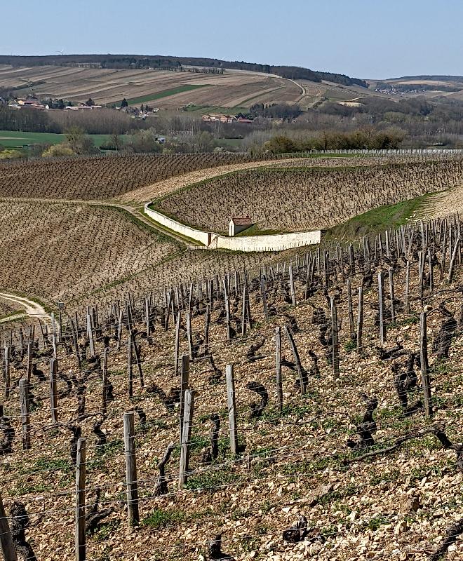 Chablis Moutonne 31 March 2021